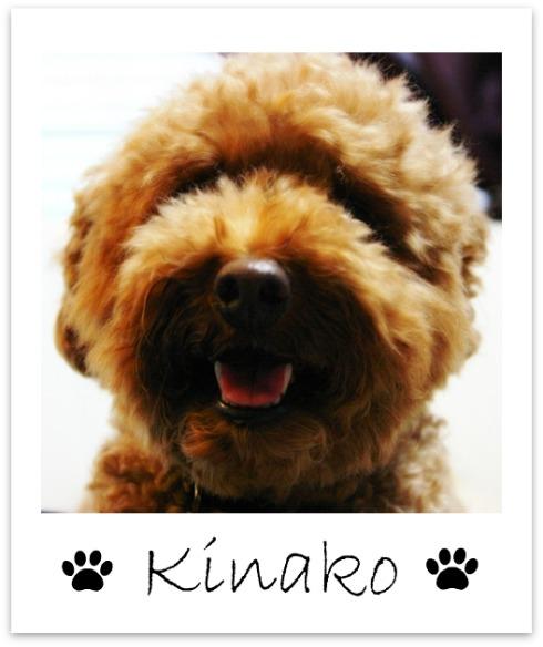 kinako1.jpg