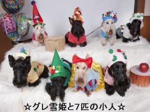 グレ雪姫と7匹の小人・・・(笑)