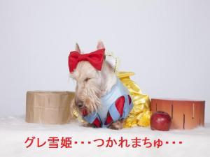 グレ雪姫・・・つかれまちゅ・・・