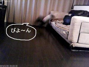 ぴよ~ん!!