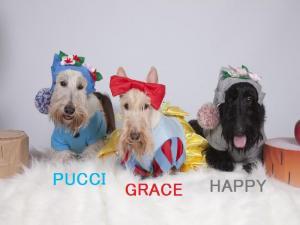 PUCCI&HAPPYとGRACE