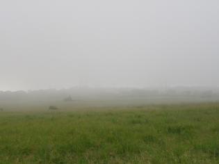 2011.6.27散歩6