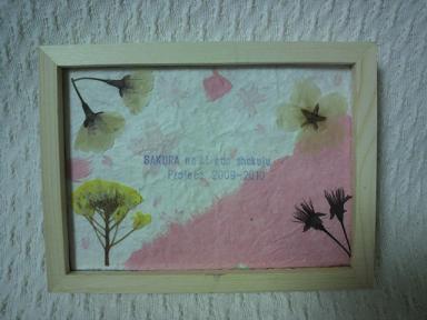 桜の木エコ植樹プロジェクト!2009-2010 4