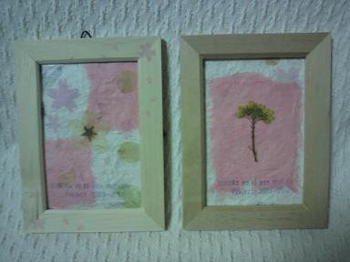 桜の木エコ植樹プロジェクト!2009-1020 6