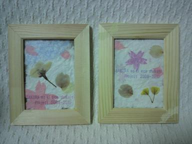 桜の木エコ植樹プロジェクト!2009-1020 8