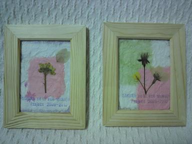 桜の木エコ植樹プロジェクト!2009-1020 9