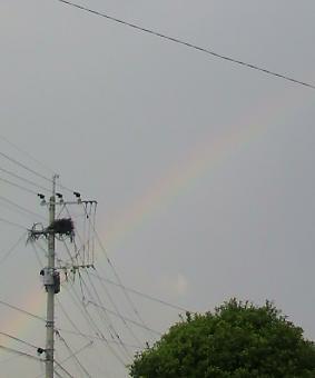 虹がキレイ(*´∇`*)