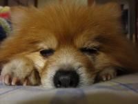 相変わらずの寝顔です。