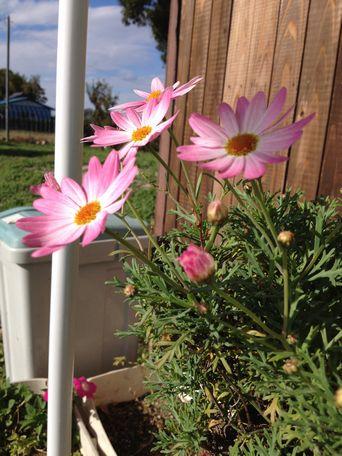 20131112flower.jpg