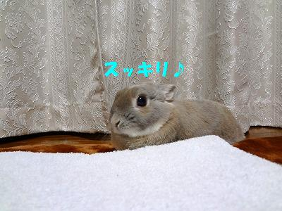 1_20130309033806.jpg