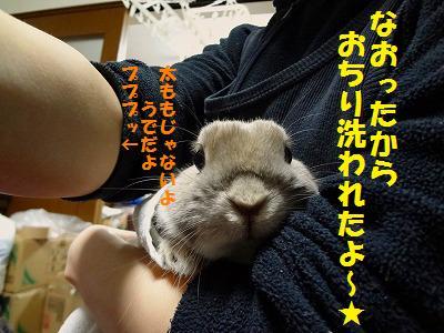 2_20130315163218.jpg