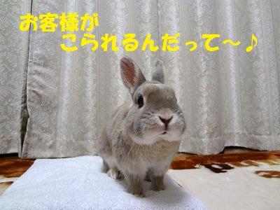 3_20130210011908.jpg