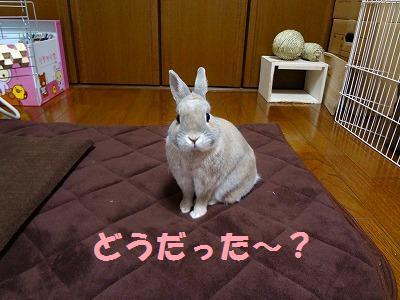 3_20130221041231.jpg