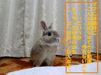 3_20130313021844.jpg