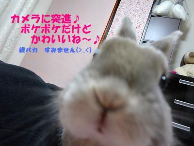 3_20130327051658.jpg