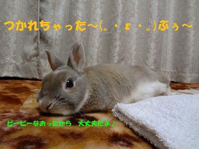 4_20130315163219.jpg