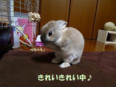 4_20130326045515.jpg
