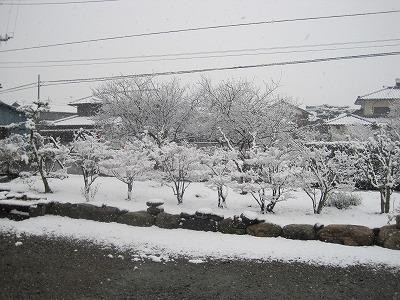 IMG_0197yuki.jpg