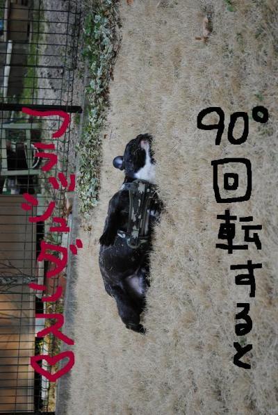 106_convert_20110405223322.jpg