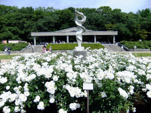 神代植物公園・バラ園11〔フリー写真〕