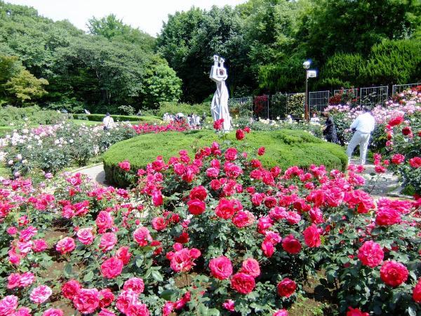 神代植物公園・バラ園13〔フリー写真〕