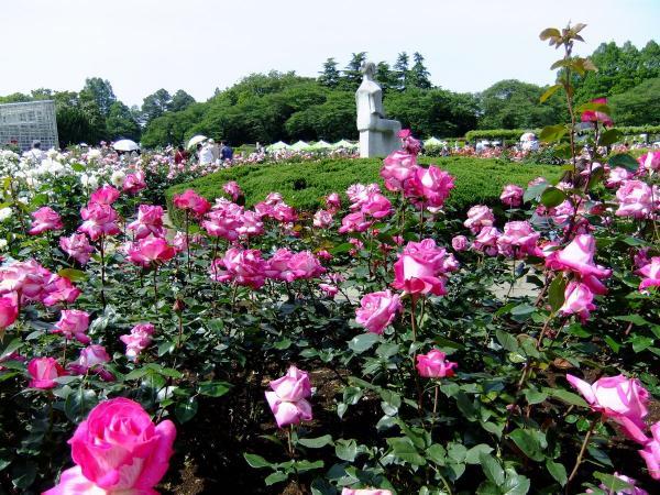 神代植物公園・バラ園22〔フリー写真〕
