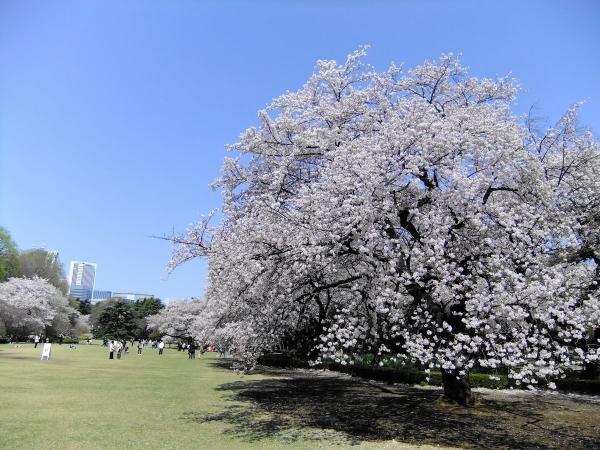 新宿御苑36〔フリー写真〕