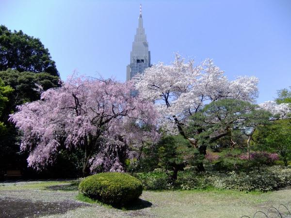 新宿御苑42〔フリー写真〕