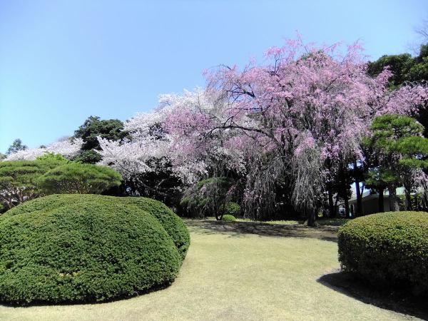 新宿御苑48〔フリー写真〕