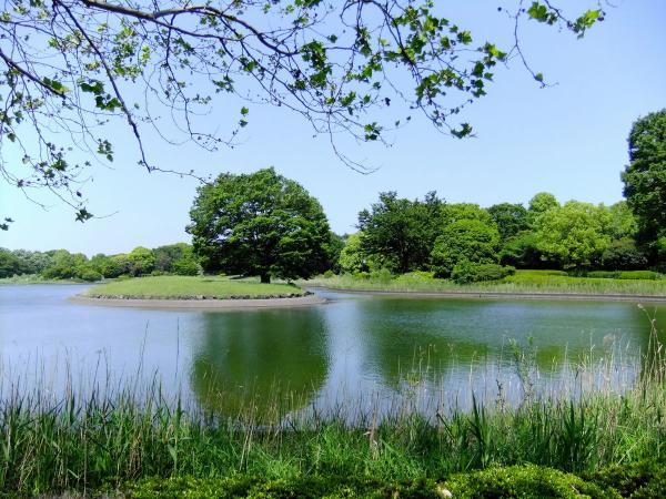 昭和記念公園4〔フリー写真〕