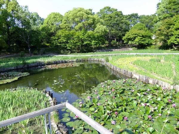昭和記念公園15〔フリー写真〕
