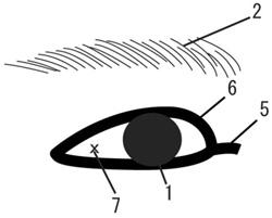 眼形メガネ