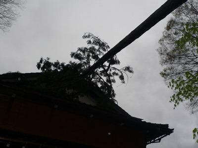 P1060481.jpg
