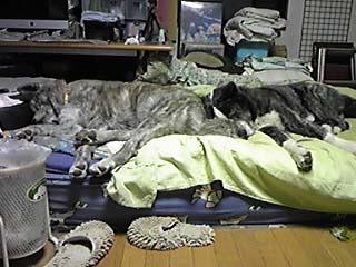 雑然ベッド