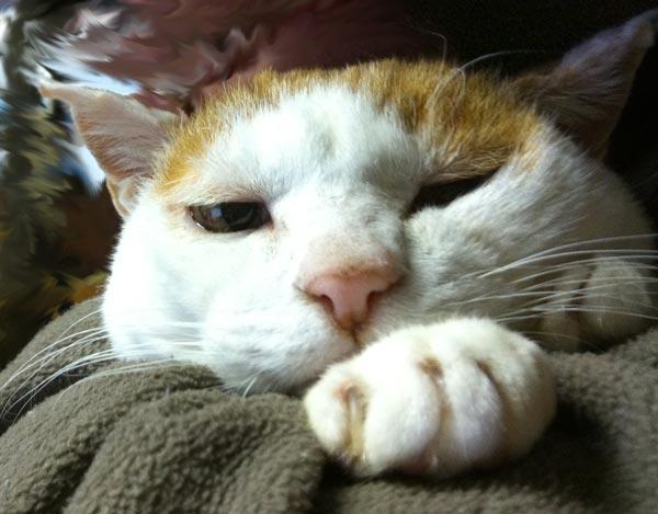 cat01_20110125125359.jpg