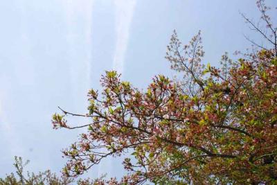鶴舞公園の空