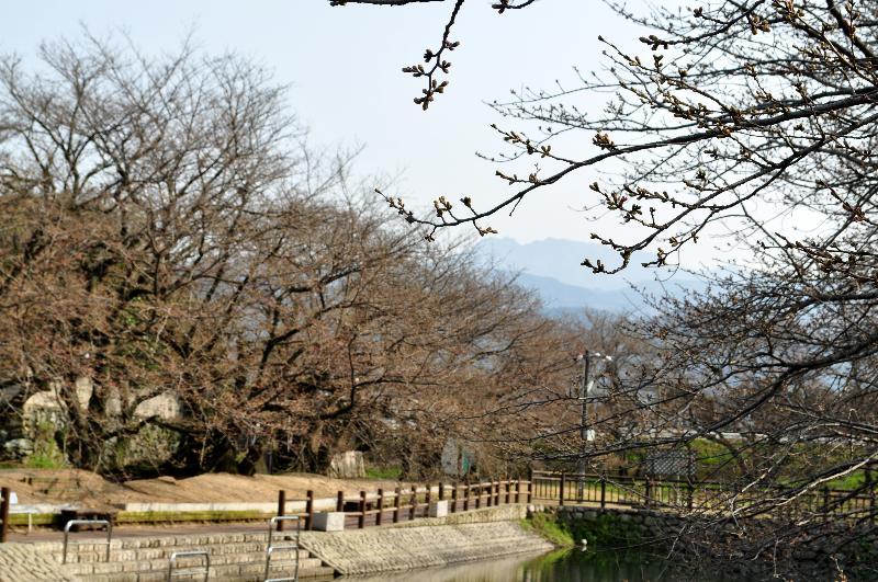 西条市石田 ひょうたん池 お花見スポット