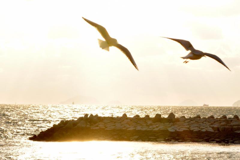 松山市 風和里海岸 カモメ