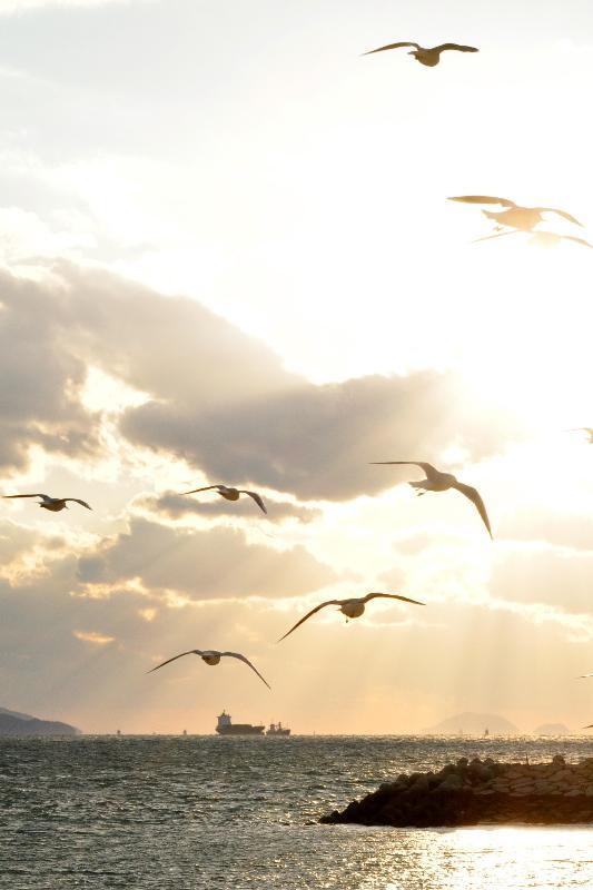 松山市 風和里海岸 カモメと海