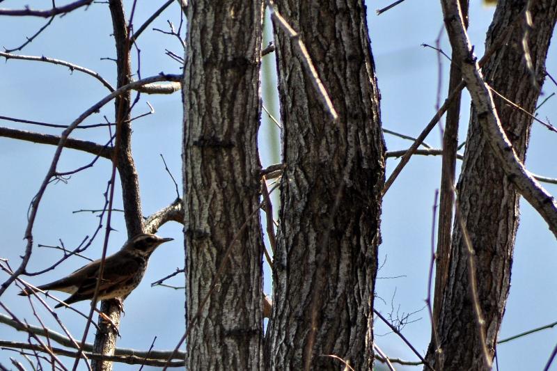 西条市の野鳥