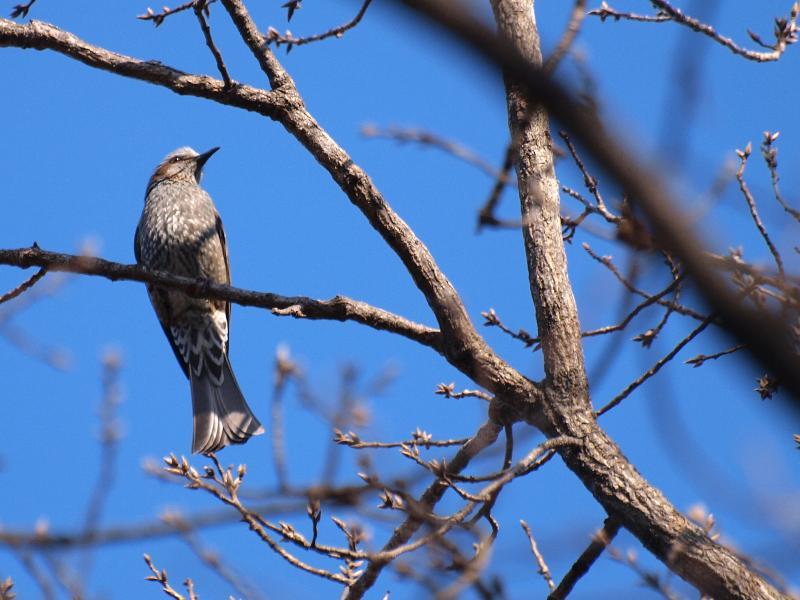 森の交流センター 野鳥