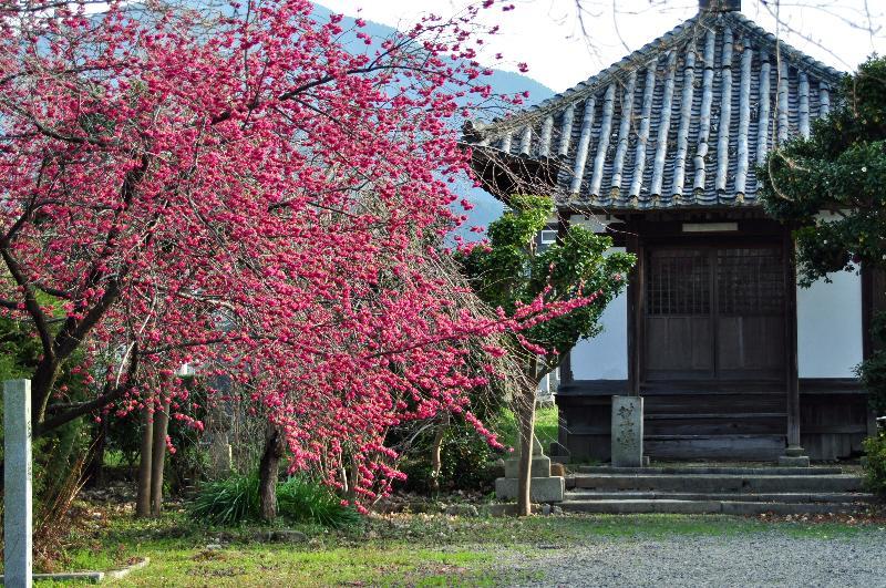 西条市小松 本善寺