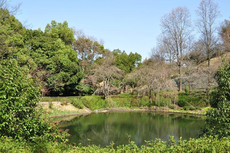 今治市朝倉町谷 鹿ノ子池公園 お花見