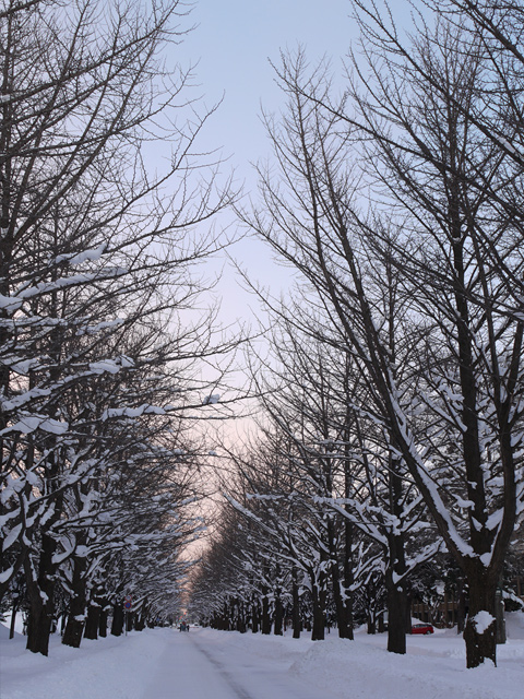 hokudai-winter_12t.jpg