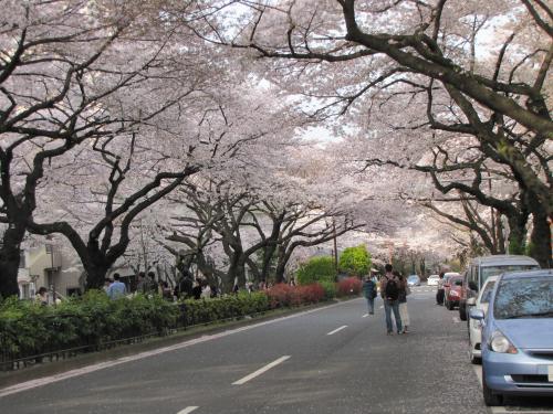 お花見散歩10