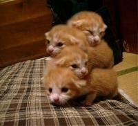 猫四段重ねw