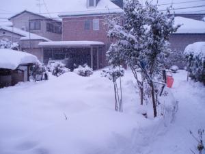 20110115朝からの降雪