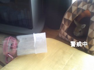 PA0_0017_20120131150019.jpg