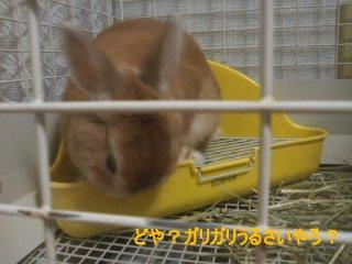 PA0_0017_20120317173712.jpg
