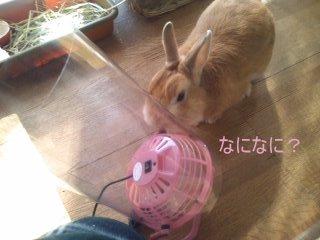 PA0_0018_20120131145947.jpg
